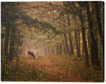Canvas Print Red deer in a forest