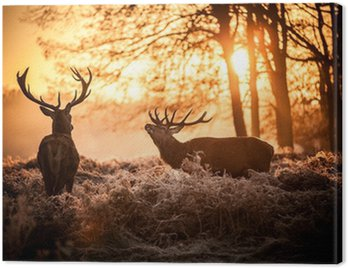 Canvas Print Red Deer in Morning Sun.