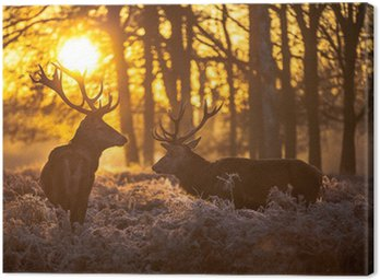 Canvas Print Red deer