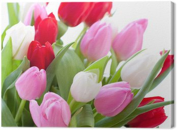 Red, pink and white tulips