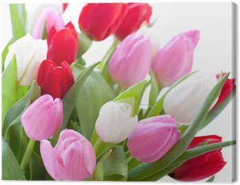Red, pink and white tulips Canvas Print