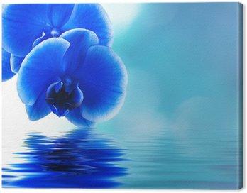 reflejo de las orquideas Canvas Print