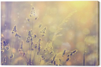 Retro blurred lawn grass at sunset with flare. Vintage purple red and yellow orange color filter effect used. Selective focus used. Canvas Print