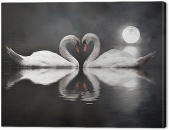 romantic swan during valentine's day