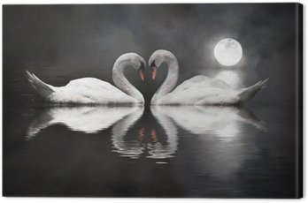 romantic swan during valentine's day Canvas Print