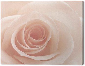 Canvas Print rose