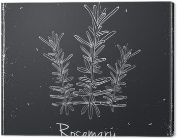 Canvas Print Rosemary Herbs and Spices.