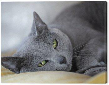 Russian blue Cat
