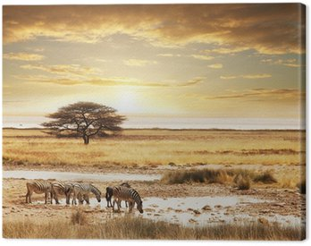 Canvas Print Safari