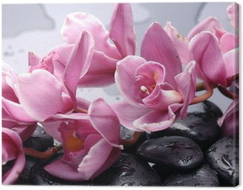 Set of cattleya orchid flower and stone with water drops