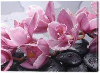 Canvas Print Set of cattleya orchid flower and stone with water drops