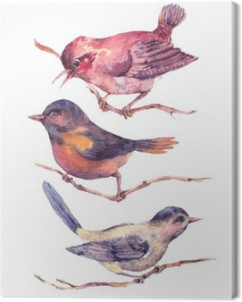 Set of colorful watercolors birds isolated on white Canvas Print