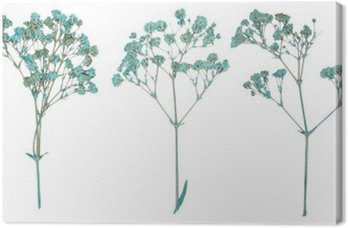 Canvas Print Set of wild dry pressed flowers