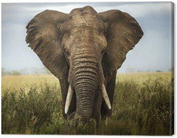 sfondo di elefante