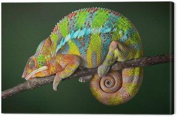 Sleeping Chameleon Canvas Print