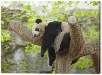 Sleeping giant panda baby Canvas Print