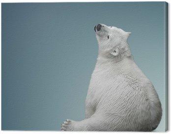 small polar bear cub