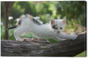 Small white kitten scratching tree branch Canvas Print
