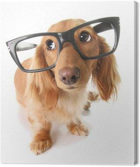 Canvas Print Smart puppy