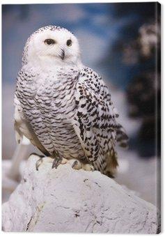 Canvas Print Snowy Owl