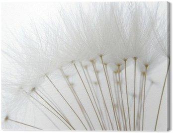 soft white dandelion seeds Canvas Print