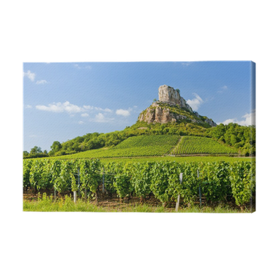 Solutre rock with vineyards burgundy france canvas print pixers we live to change - The splendid transformation of a vineyard in burgundy ...