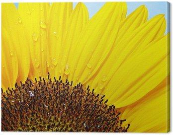 Canvas Print sonnenblume