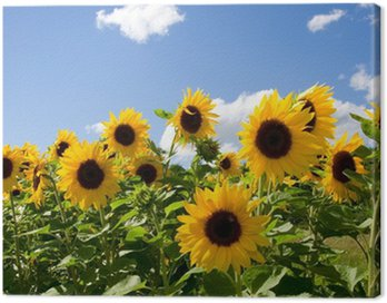 Canvas Print Sonnenblumen