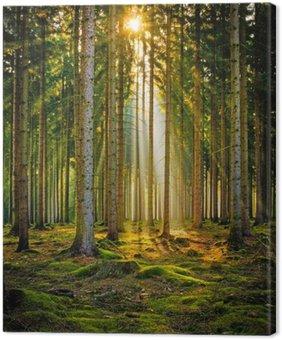 Canvas Print Sonnenstrahlen im Nadelwald im Morgennebel