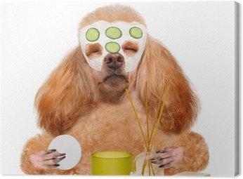 spa wash dog