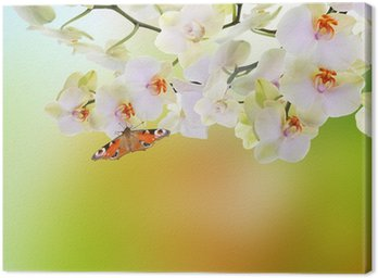 Spring beautiful nature background Canvas Print