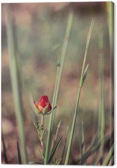 Canvas Print Spring Flower