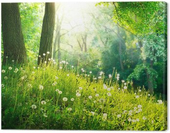 Canvas Print Spring Nature. Beautiful Landscape. Green Grass and Trees