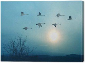 Canvas Print Spring or autumn migration of cranes