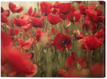 Canvas Print Spring Poppy Flowers