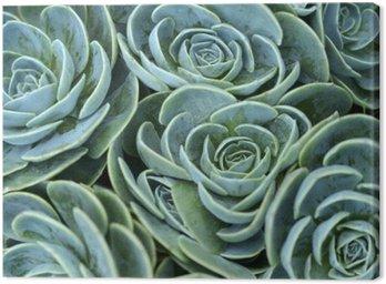Canvas Print succulent plant