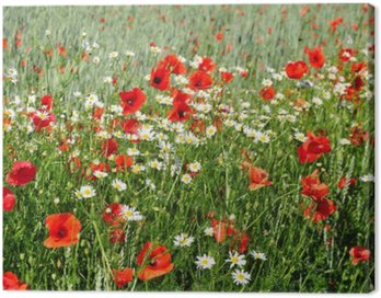 Canvas Print Summer flowers on meadow