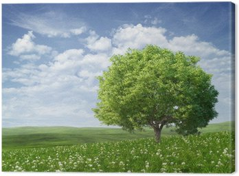 Summer landscape with green tree Canvas Print