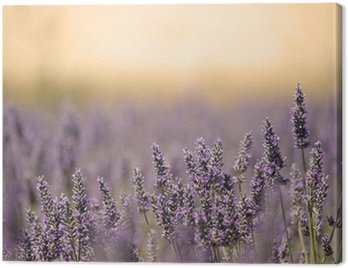 Summer Meadow with Flower. Lavender.