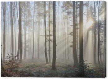Canvas Print Sun rays through the foggy forrest