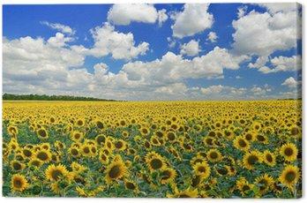Canvas Print Sunflower field