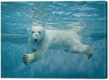 Canvas Print Swimming Thalarctos Maritimus (Ursus maritimus) - Polar bear