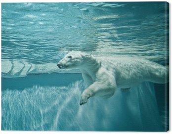 Canvas Print Thalarctos Maritimus (Ursus maritimus) - Polar bear