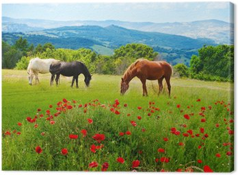 Canvas Print There horses grazing grass