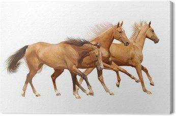 Canvas Print three horses on white