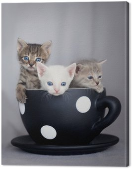 Three kittens sitting in large cup