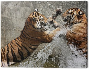 Canvas Print Tiger Battle