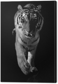 Canvas Print tiger black and white