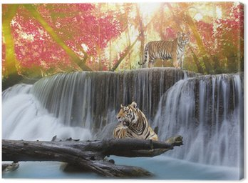 Tiger in the waterwall