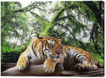 Canvas Print Tiger looking something on the rock in tropical evergreen forest
